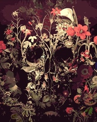 Paint By Numbers Flower Skull 40x50