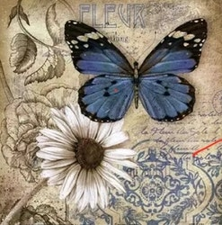 Diamanttavla Blue Butterfly White Flower 50x50