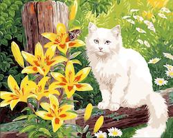 Paint By Numbers Vit Katt 40x50