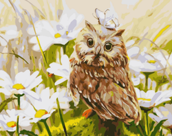 Paint By Numbers Summer Owl 40x50