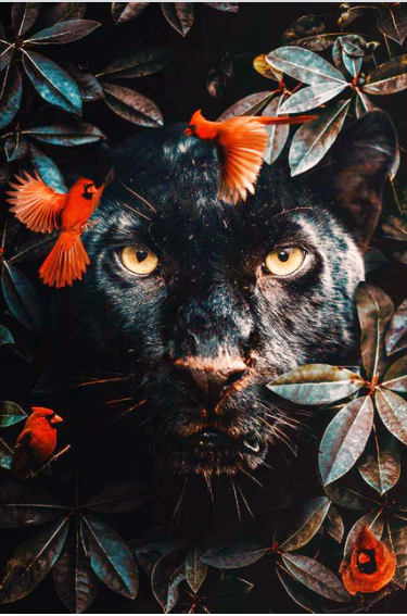 Diamanttavla Panther Flowers 50x80