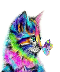 Diamanttavla Colorful Cat And Butterfly 40x40