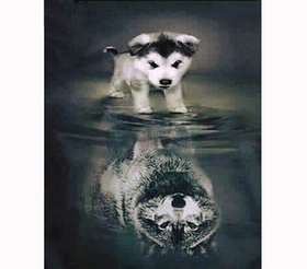Diamanttavla (R) Hund Med Vargspegelbild 40x50