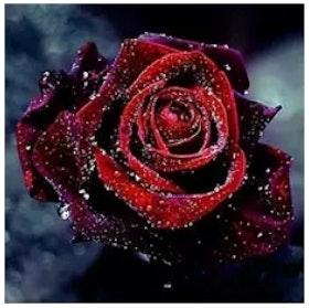 Diamanttavla (R) Rose Raindrops 30x30