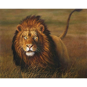 Paint By Numbers Hunting Lion 40x50