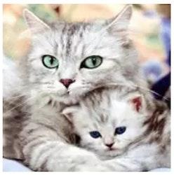 Diamanttavla Cat Love 40x50
