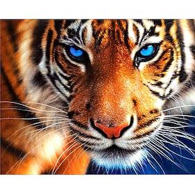 Diamanttavla (R) Tiger Blue Eye 40x50