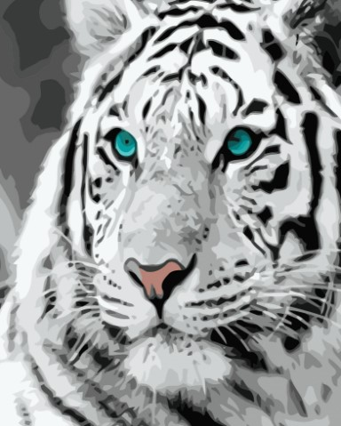 Paint By Numbers White Tiger 40x50