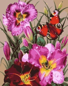 Paint By Numbers Flowers And Butterfly 40x50