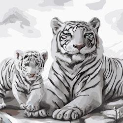 Paint By Numbers Vita Tigrar  40x50