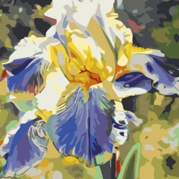 Paint By Numbers  Iris 40x50