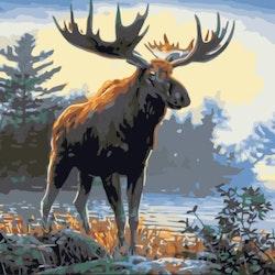 Paint By Numbers Skogens Konung 40x50