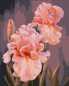 Paint By Numbers Rosa Iris 40x50