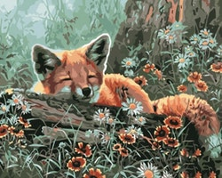 Paint By Numbers Sleeping fox 40x50