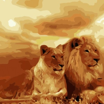 Paint By Numbers Lions 40x50