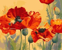 Paint By Numbers Poppy Flowers 40x50