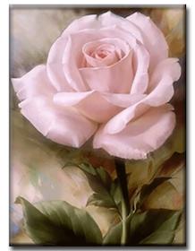 Diamanttavla Pink Rose 30x40