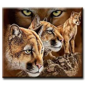 Diamanttavla Puma 50x70
