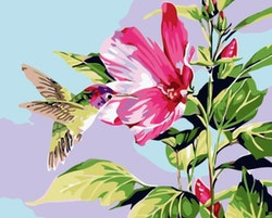 Paint By Numbers Kolibri 40x50
