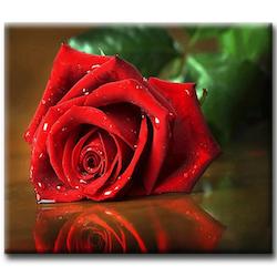 Diamanttavla Röd Vacker Ros 30x40