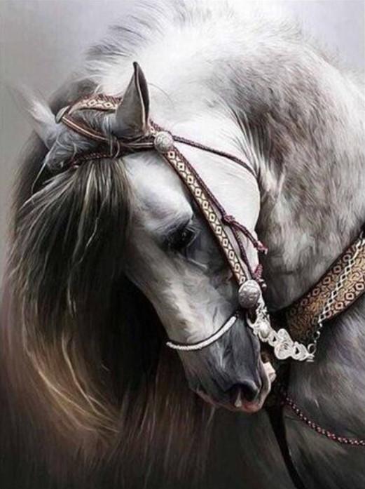 Dimamanttavla Handsome Horse 40x50