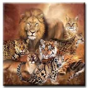 Diamanttavla Big Cats 50x50