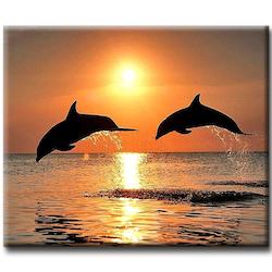 Diamanttavla Sunset Dolphins 40x50