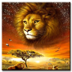 Diamanttavla African Lion 50x50
