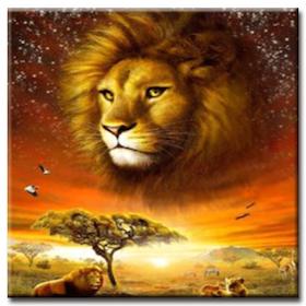 Diamanttavla African Lion 50x50
