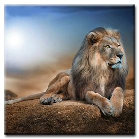 Diamanttavla (R) Lion King 50x50