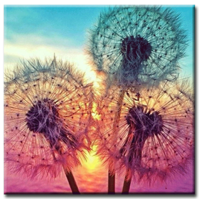 Diamanttavla Colorful Dandelion 50x50