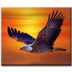Diamanttavla (R) Sunset Eagle 40x50