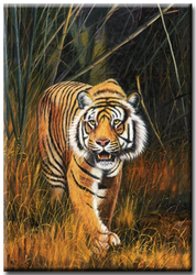Diamanttavla Tiger In Night 40x50
