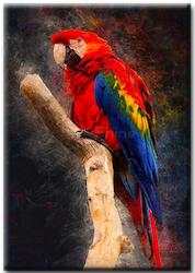 Diamanttavla Parrot 40x50