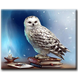 Diamanttavla Books Owl 40x50