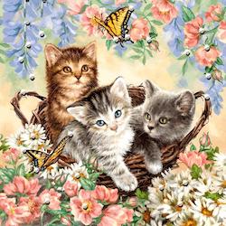 Diamanttavla Flower Kittens 80x80