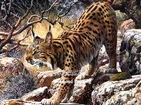 Diamanttavla Leopard Lynx 40x50