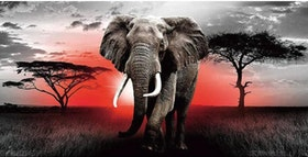 Diamanttavla Elephant African Sunset 40x80