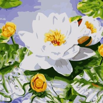 Paint By Numbers Vit Näckros 40x50