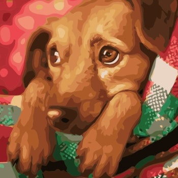 Paint By Numbers Puppy 40x50