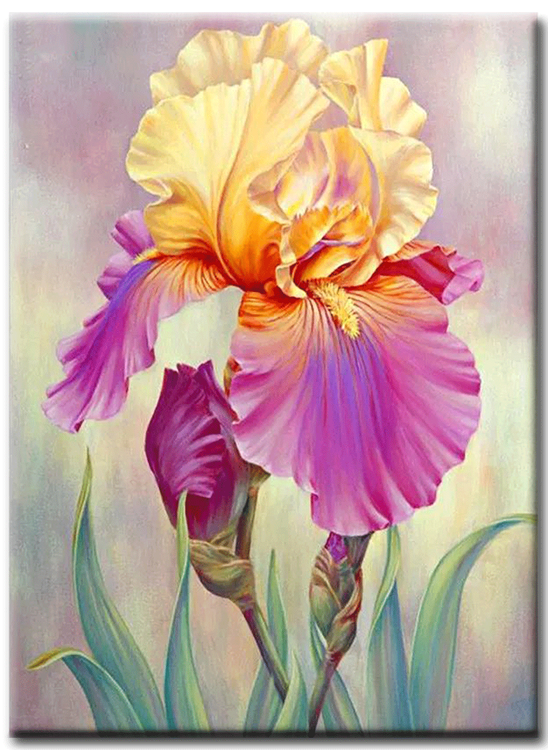 Diamanttavla Iris Flower 40x50