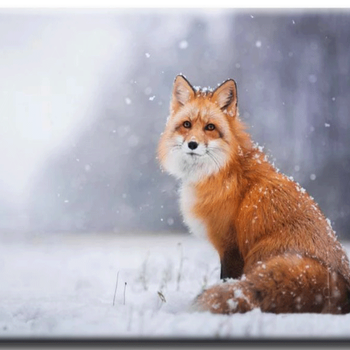Diamanttavla Snow Fox 40x50