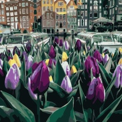 Paint By Numbers City Purple Tulips 50x70
