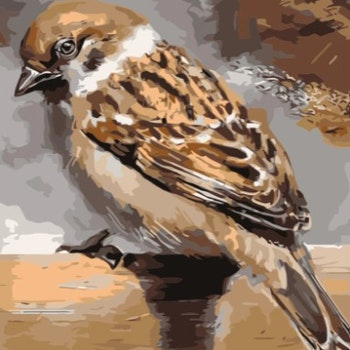 Paint By Numbers Sparrow 40x50