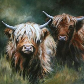 Diamanttavla Highland Cattle Cows 40x50