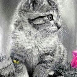 Diamanttavla Little Kitten 40x50