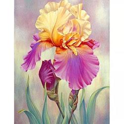 Diamanttavla (R) Iris Flower 40x50