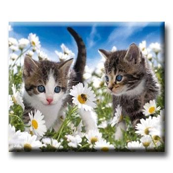 Diamanttavla Summer Flower Kittens 40x50