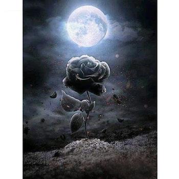 Diamanttavla Black Rose 40x50