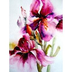 Diamanttavla Watercolor Flowers 40x50